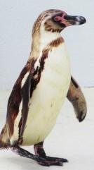 stephen penguin